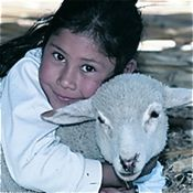 Buy a sheep: Donate to Heifer!